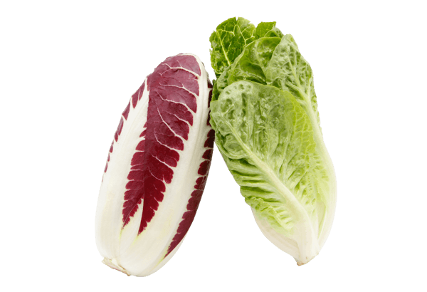 Gourmet salat, gourmetsalat, sprød salat, frisk salat, hjertesalat, hjerte salat, mini-romaine salat, romainesalat, romaine salat, miniromaine salat, radicchiosalat, radicchio salat, rød salat