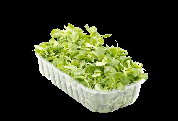 Feldsalat, Feld salat, salat, feltsalat, felt salat, salatbakke, grøn salat, vasket salat, spiseklar salat