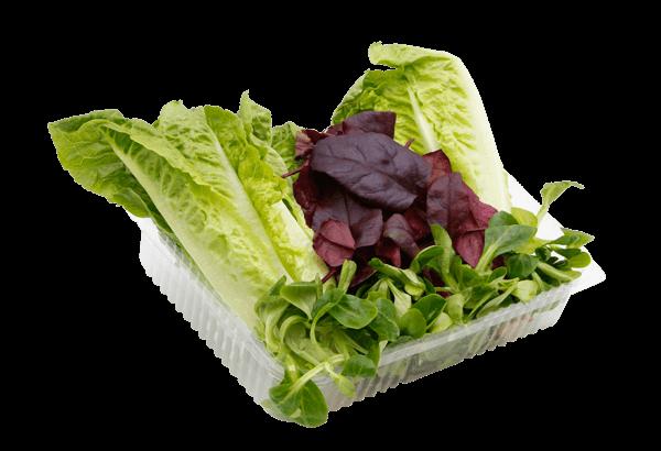 Triplesalat, Triple salat, treblesalat, hjertesalat, hjerte salat, mini.-romaine, mini romaine, feldsalat, feld salat, Bulls Blood, Bulls Blood Salat, bullsbloodsalat, bulls bloodsalat