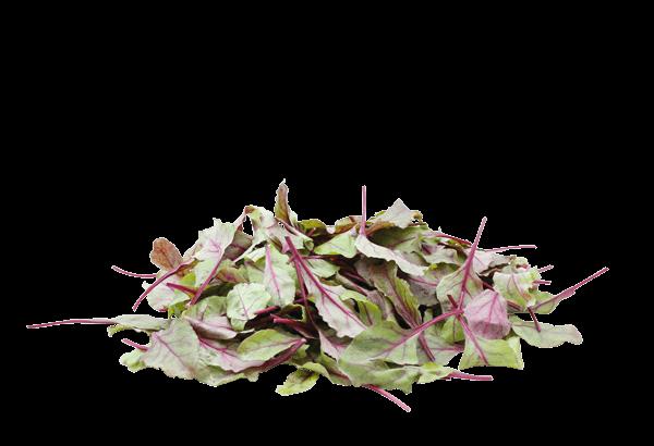 Blls blood salat, bulls blood salatblanding, salatblanding, salat, rød salat, bulls salat, salatpose, pose med salat, salatblade