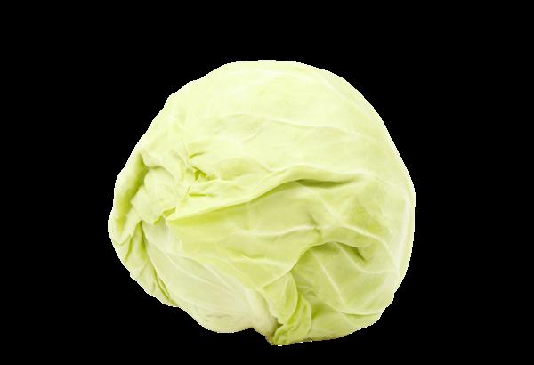 Hvidkål, dansk Hvidkål, Økologisk Hvidkål, dansk Økologisk Hvidkål, øko Hvidkål, dansk øko Hvidkål, Hvidkål sæson, årstidens Hvidkål