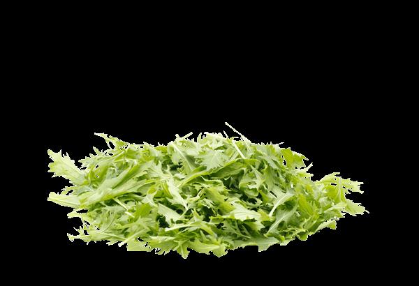 Mizuna, dansk Mizuna, Mizuna salat, krydret salat, dansk Mizuna salat