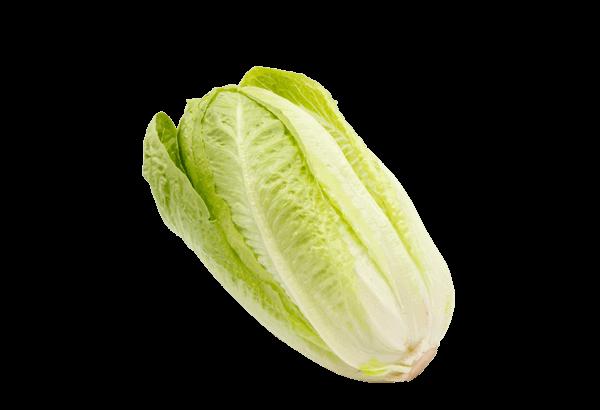 Romainesalaat, Romaine, Salat, Romaine salat, grøn salat, caesar salat, cæsarsalat, caesarsalat
