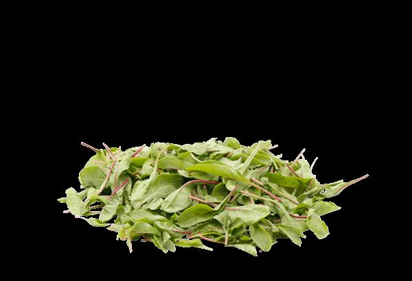 Mangold Rød Dansk, Dansk Mangold Salat, Mangold Salat, rød Mangold, dansk Mangold, salat, salatblade