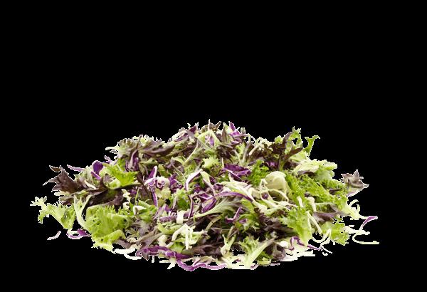 Brassica Kål/Salat Mix, Brassica salat, Brassica salat mix, Brassica salat blading, kålsalat, kål salat, salt og kålblanding